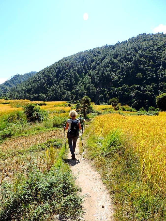 Turist som enroute trekking under risfältet Khamsum Yulley Namgyal Choten, Bhutan royaltyfri foto