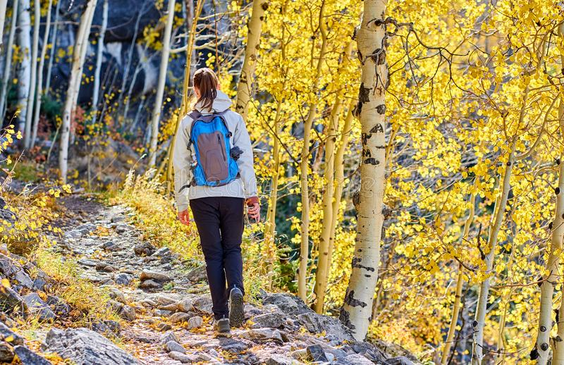 Turist som fotvandrar i asp- dunge på hösten arkivfoto