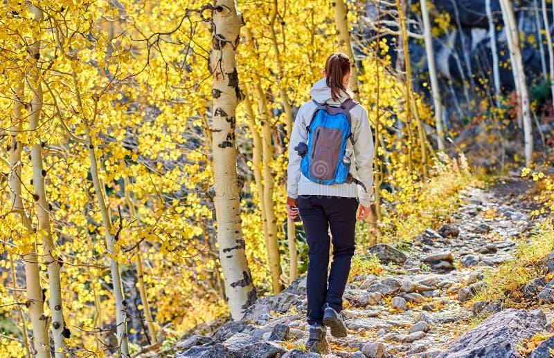 Turist som fotvandrar i asp- dunge på hösten royaltyfri foto