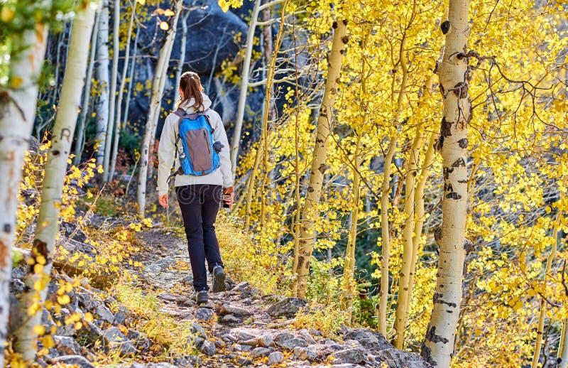 Turist som fotvandrar i asp- dunge på hösten royaltyfria bilder