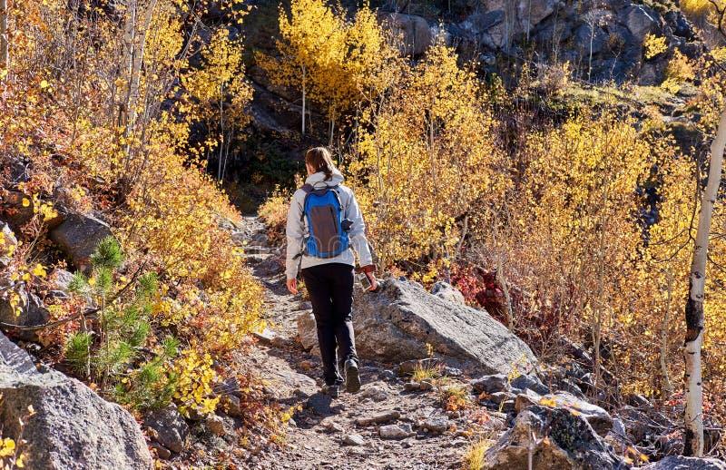 Turist som fotvandrar i asp- dunge på hösten royaltyfria foton