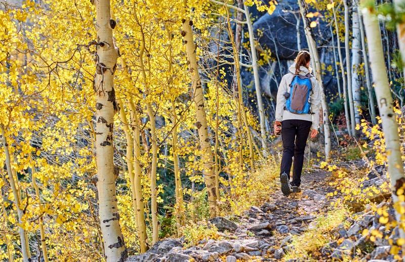 Turist som fotvandrar i asp- dunge på hösten arkivfoton