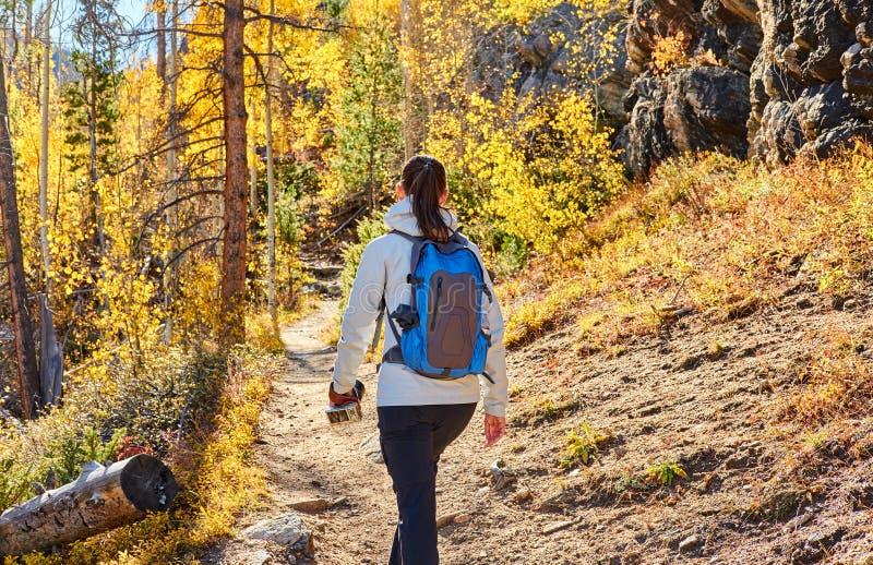 Turist som fotvandrar i asp- dunge på hösten royaltyfri fotografi