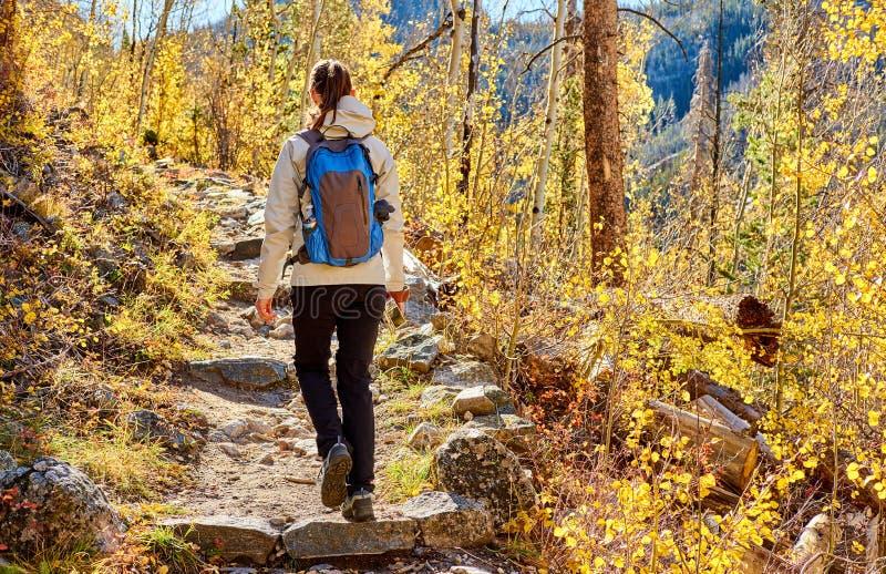 Turist som fotvandrar i asp- dunge på hösten arkivbild