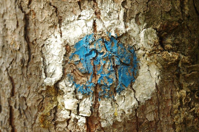 Turist- tecken på ett sörjaträd fotografering för bildbyråer