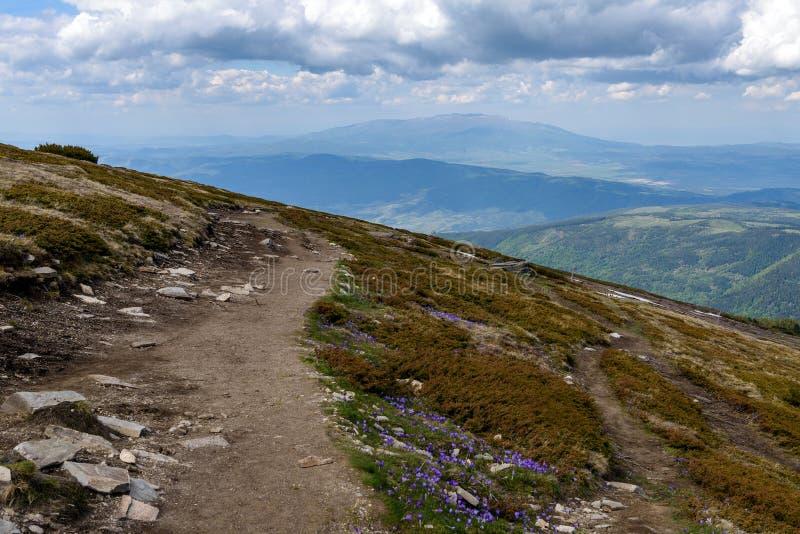 Turist- vandringsled i solig dag, Rila berg, Bulgarien arkivbilder
