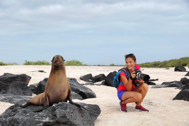 Turista animale del fotografo della natura della fauna selvatica che esamina il leone marino di Galapagos immagini stock libere da diritti