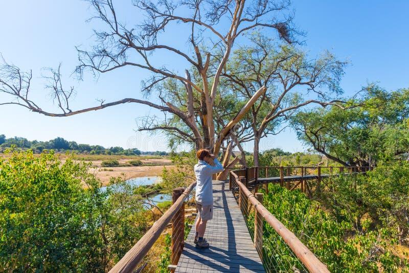 Turista che esamina panorama con binoculare dal punto di vista sopra il paesaggio scenico e variopinto del fiume di Olifants, con fotografia stock libera da diritti