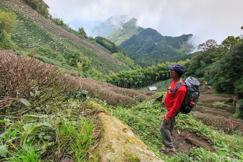 Turista che guarda le piantagioni di tè di Ooolong nella montagna di Nantou, Taiwan fotografia stock libera da diritti