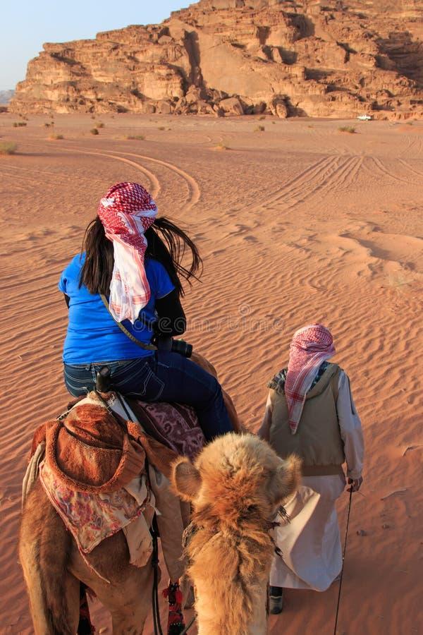 Turista che guida un cammello al tramonto nel deserto di Wadi Rum, Giordania immagine stock