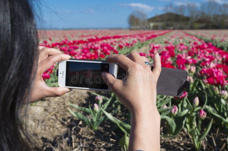 Turista com tulipas foto de stock
