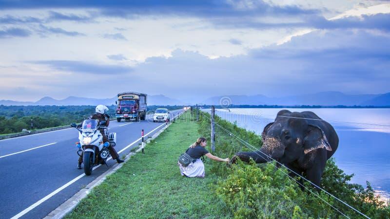 Turista con el elefante srilanqués en el parque nacional de Uda Walawe, senior foto de archivo