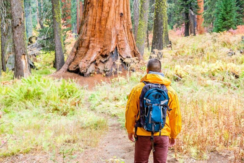 Turista con lo zaino che fa un'escursione nel parco nazionale della sequoia fotografia stock