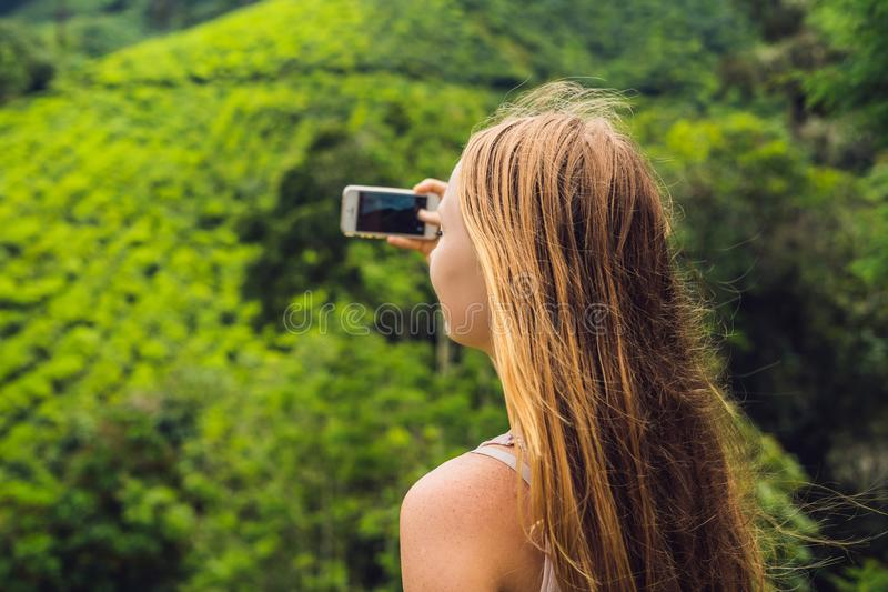 Turista das mulheres em uma plantação de chá As folhas de chá selecionadas, frescas naturais no chá cultivam em Cameron Highlands fotos de stock royalty free