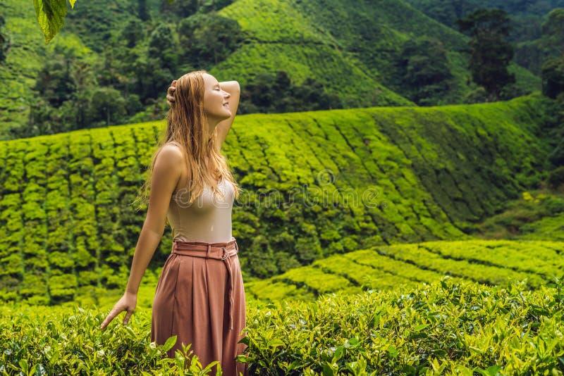 Turista das mulheres em uma plantação de chá Chá selecionado, fresco natural l imagens de stock