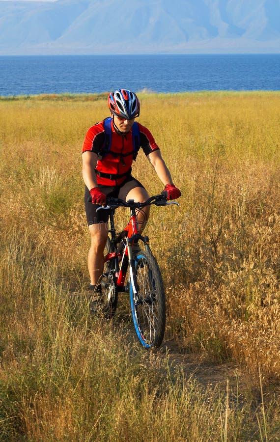 Turista de la bici en campo amarillo imagen de archivo