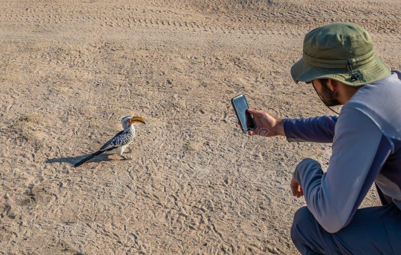 Turista en el sombrero del safari que toma la imagen del hornbill rojo-cargado en cuenta en el camino de tierra en África con sma imágenes de archivo libres de regalías