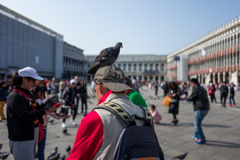 Turista en Venecia con la paloma fotos de archivo