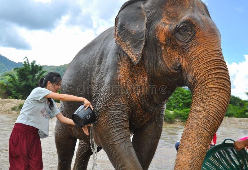 Turista fêmea feliz que banha o elefante pelo rio foto de stock