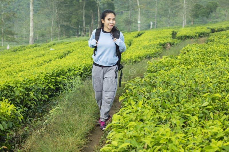 Turista fêmea que anda na plantação de chá imagens de stock royalty free
