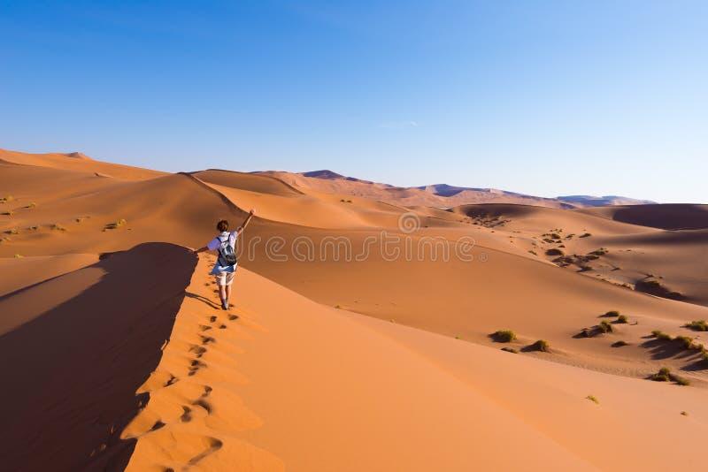 Turista que anda nas dunas cênicos de Sossusvlei, deserto de Namib, parque nacional de Namib Naukluft, Namíbia Luz da tarde avent imagens de stock