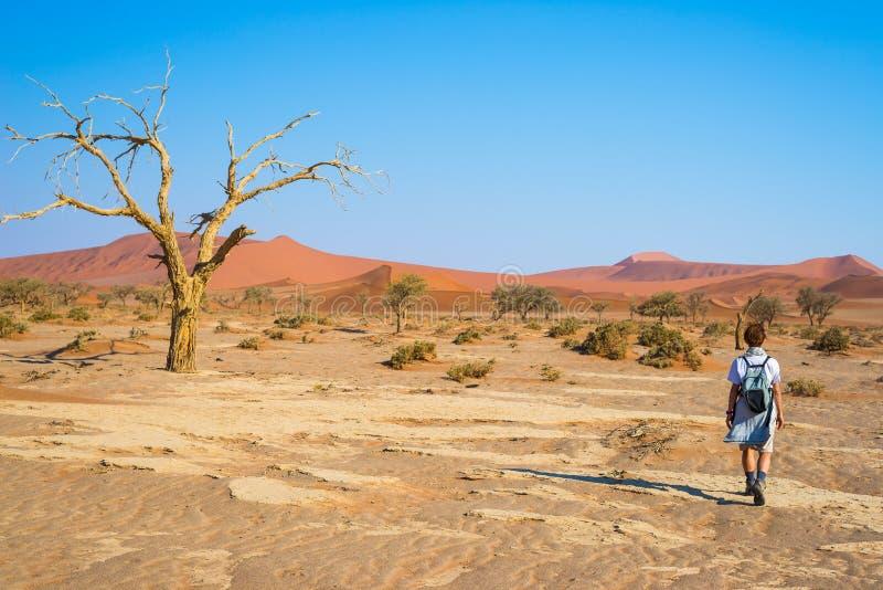 Turista que camina en el desierto de Namib majestuoso, el Sossusvlei, el parque nacional de Namib Naukluft, la atracción principa fotografía de archivo