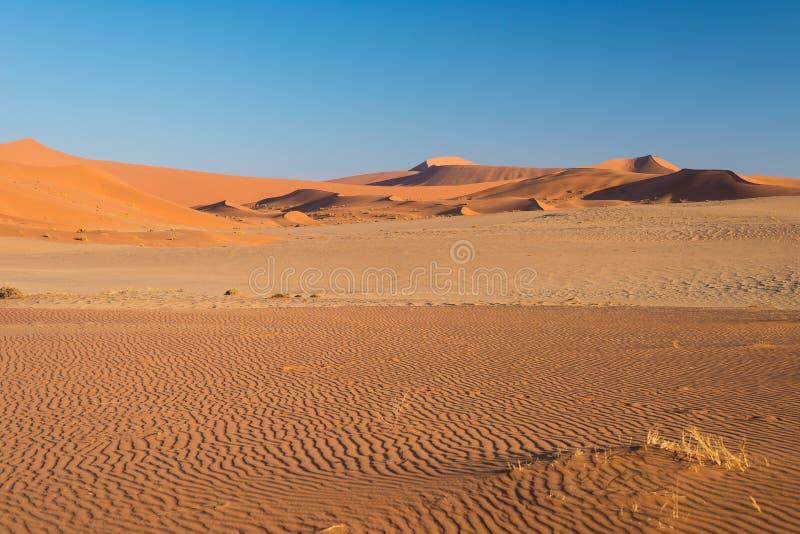 Turista que camina en las dunas escénicas de Sossusvlei, desierto de Namib, parque nacional de Namib Naukluft, Namibia Luz de la  fotografía de archivo libre de regalías