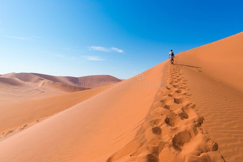 Turista que camina en las dunas escénicas de Sossusvlei, desierto de Namib, parque nacional de Namib Naukluft, Namibia Luz de la  imagenes de archivo
