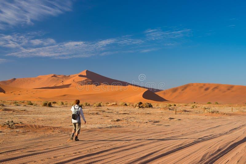 Turista que camina a Sossusvlei, desierto de Namib, parque nacional de Namib Naukluft, desetination scanic del viaje en Namibia A foto de archivo