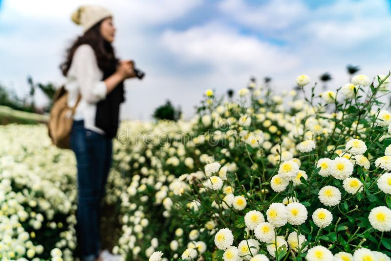Turista que está no campo do crisântemo em Taiwan fotografia de stock