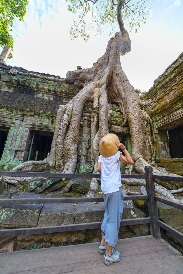 Turista que olha as raizes famosas da árvore da selva de Ta Prohm que abraçam os templos de Angkor, vingança da natureza contra c fotos de stock royalty free