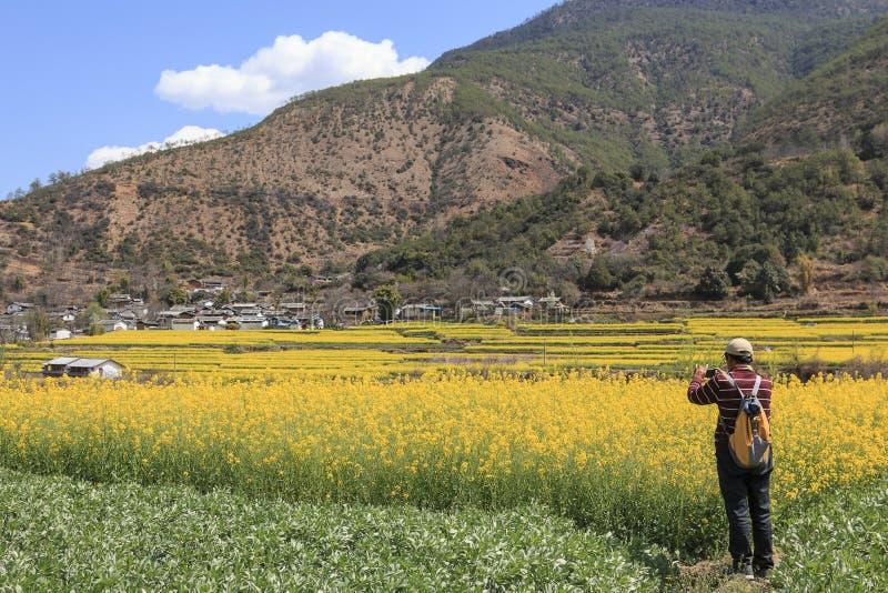 Turista que toma imagens da vila próxima de ShiGu das flores do canola na primeira curvatura do Rio Yangtzé foto de stock royalty free