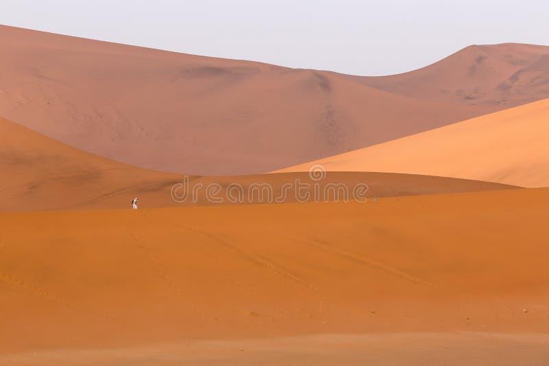 Turista vestido en blanco en las dunas de arena anaranjadas en Sossusvlei fotos de archivo