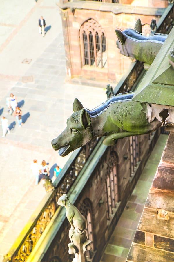 Turistas de observação fotos de stock royalty free