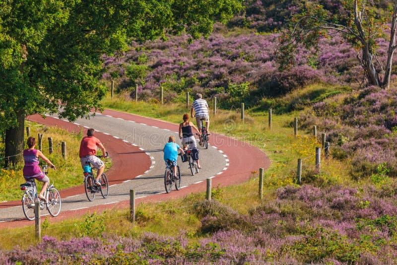 Turistas do ciclismo no parque nacional holandês Veluwezoom imagens de stock royalty free