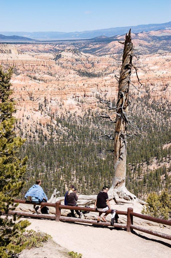 Turistas e árvore inoperante, Bryce Canyon, Utá foto de stock