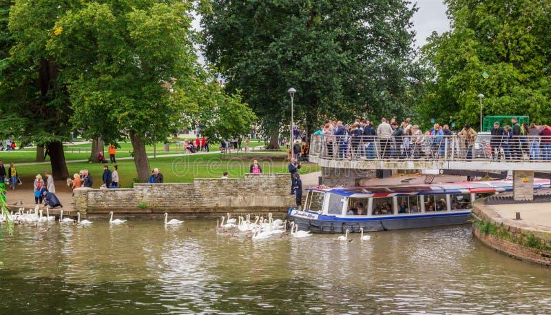 Turistas en el barco rodeado por los cisnes, Stratford sobre Avon, ciudad del ` s de William Shakespeare, West-Midlands, Inglater imagen de archivo libre de regalías