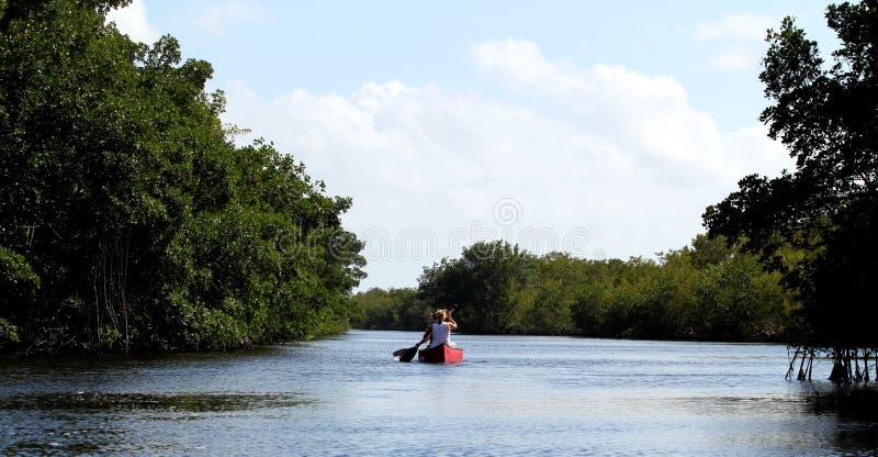 Turistas kayaking en bosque del mangle en el parque nacional de los marismas - Floridaa imágenes de archivo libres de regalías