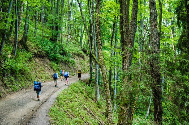 Turistas na floresta da montanha fotos de stock royalty free