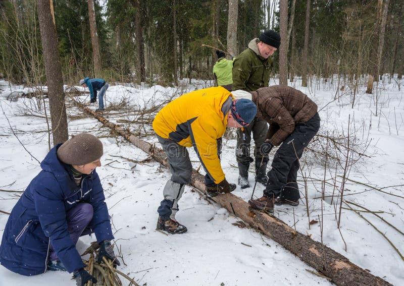 Turistas na floresta para colher a madeira para o fogo fotografia de stock royalty free