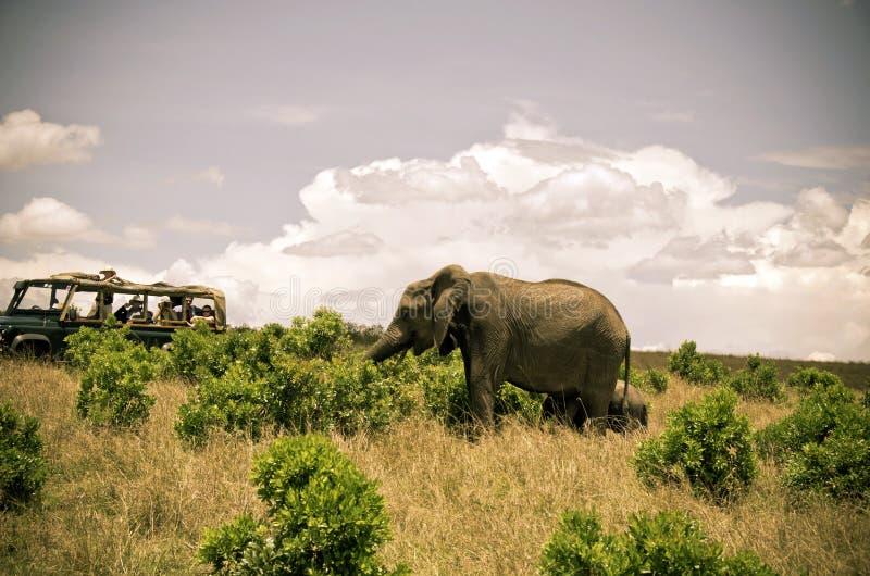 Turistas no safari fotografia de stock