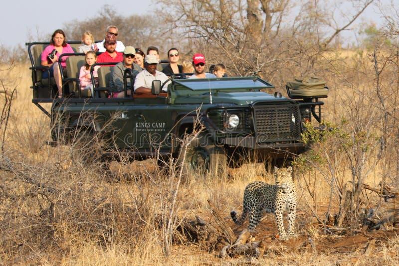 Turistas no veículo do safari observando o leopardo africano na reserva natural privada de Timbavati, África do Sul imagens de stock