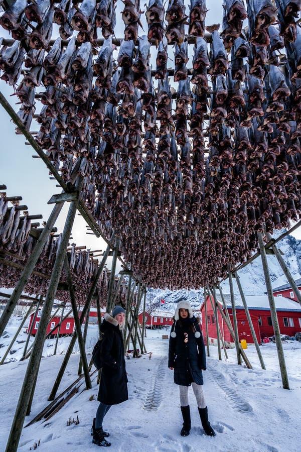 Turistas que admiran los estantes de los pescados de bacalao en Reine, Noruega Paisaje de Norwgian imagen de archivo