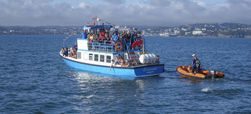 Turistas que apontam em dolthins em Torbay imagens de stock