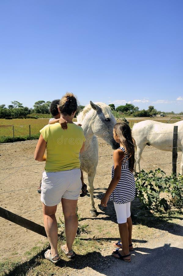 Turistas que descubren los caballos de Camargue imagenes de archivo