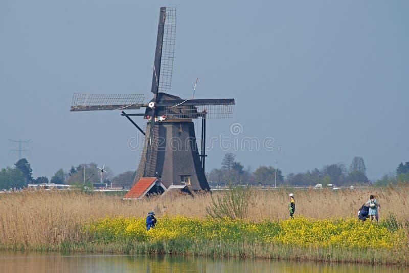Turistas que fazem fotos dos moinhos de vento na posição de Kinderdijk em amarelo coleseed imagem de stock royalty free