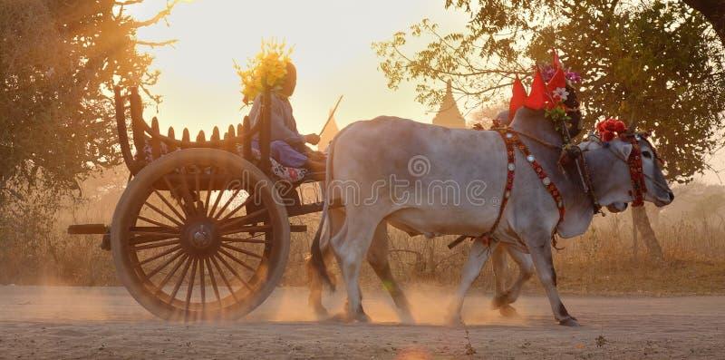 Turistas que llevan del carro del buey en la puesta del sol en Bagan, Myanmar foto de archivo libre de regalías