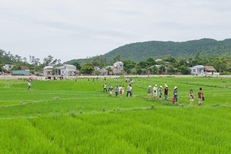 Turistas que recorren a través de arroz de arroz imágenes de archivo libres de regalías