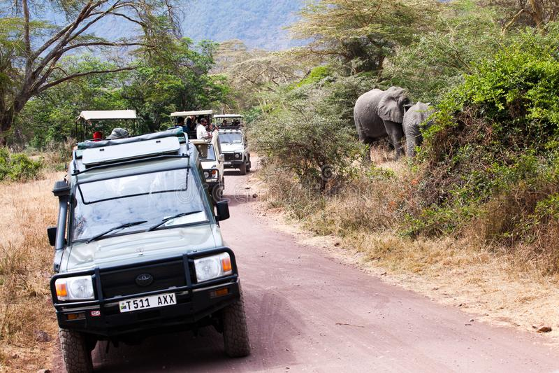 Turistas que sentam elefantes africanos foto de stock