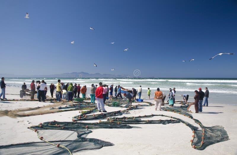 Turistas que veem a captura do dia em Strandfontein foto de stock